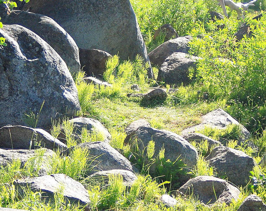Rock Photograph - Boulders And Grass by Vicki Coover