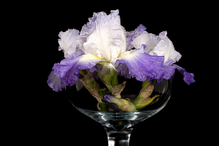 Iris Photograph - Bowl Of Iris by Trudy Wilkerson