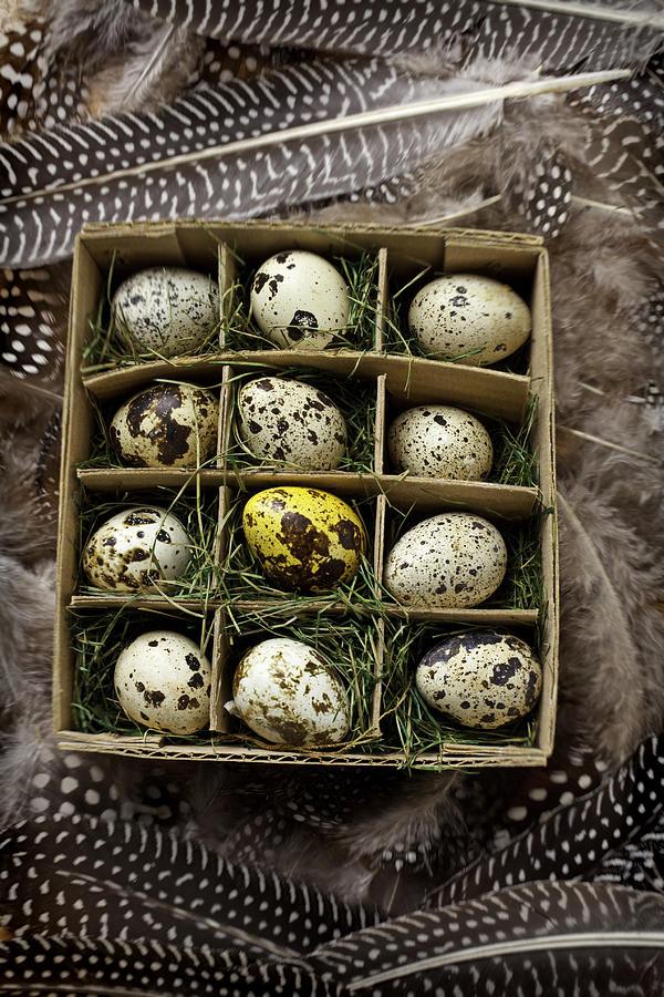 Bird Photograph - Box Of Quail Eggs by Garry Gay