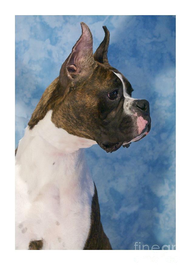 Dog Canvas Prints Digital Art - Boxer 469 by Larry Matthews