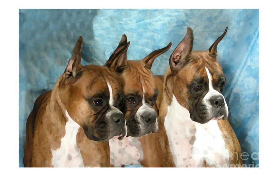 Boxer 655 Digital Art by Larry Matthews