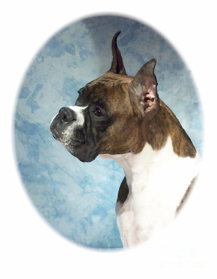 Boxer Digital Art Digital Art - Boxer 816 by Larry Matthews