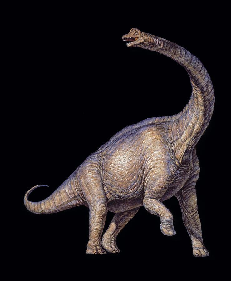 Brachiosaurus Photograph - Brachiosaurus Dinosaur by Joe Tucciarone