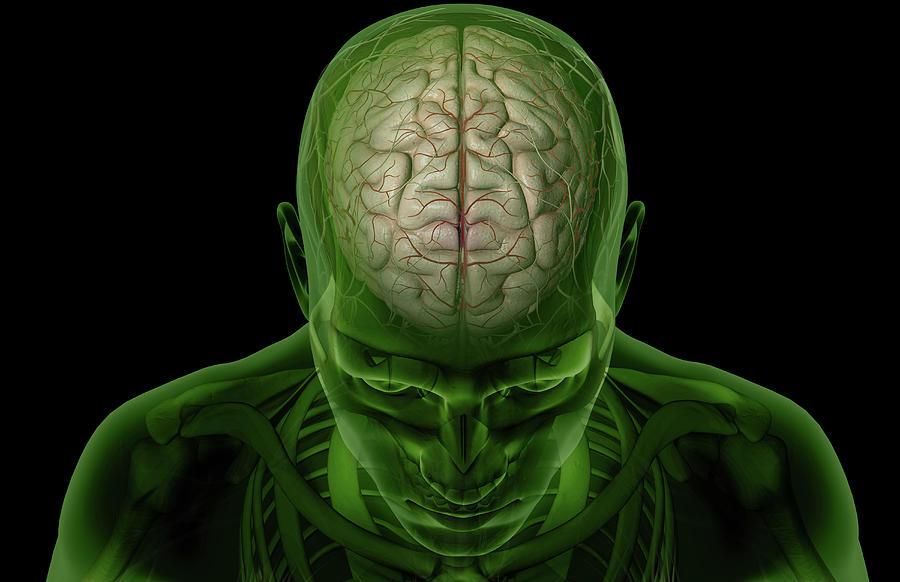 Horizontal Photograph - Brain Arteries by MedicalRF.com