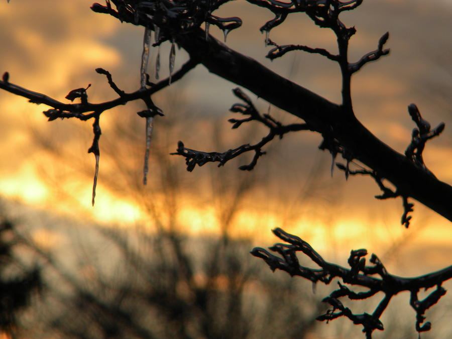 Sunset Photograph - Branches in January by Helen ONeal