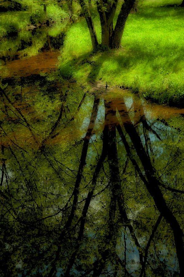 Tree Photograph - Branches Of Life Reflects by Karol Livote