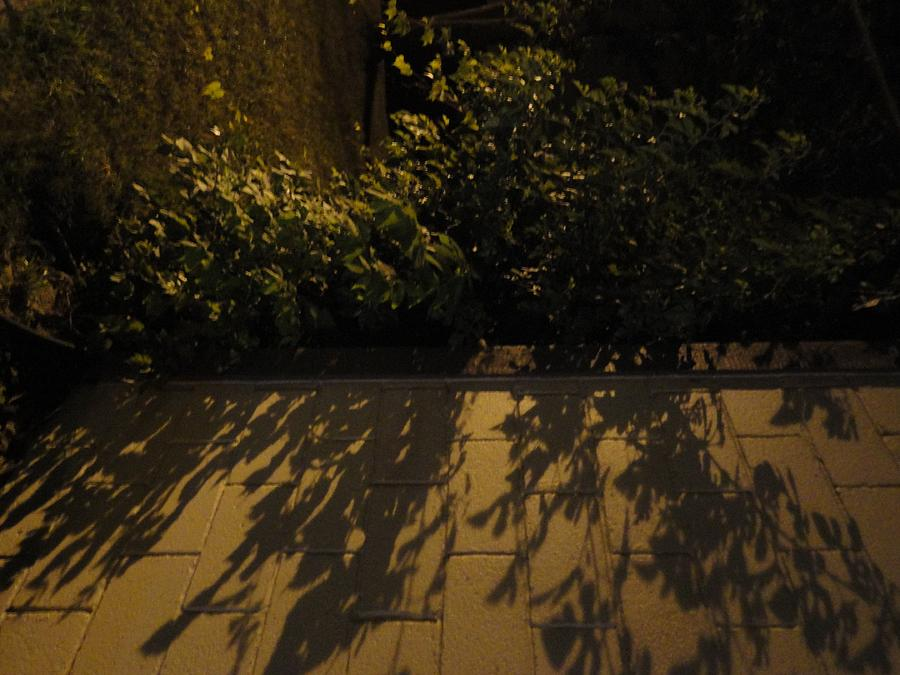 Trees Photograph - Branches Over The Wall by Guy Ricketts