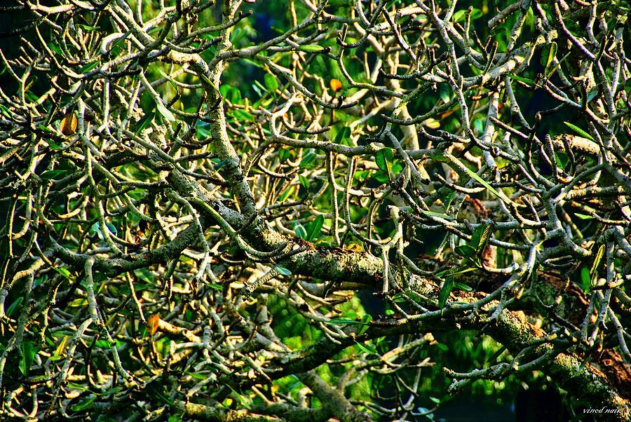 Branches Photograph by Vinod Nair