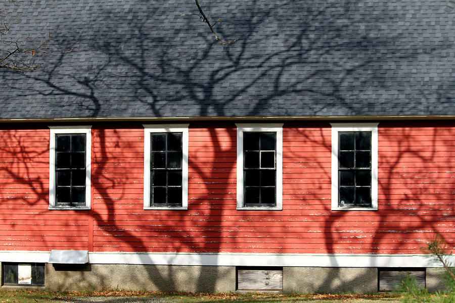 Shadows Photograph - Branching Out by Mark J Seefeldt