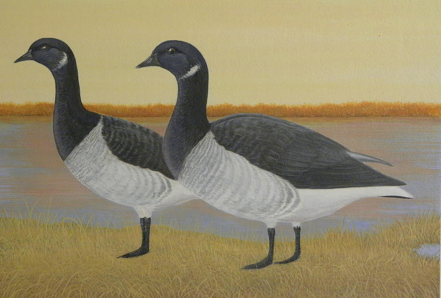 Brant Goose Painting - Brant Geese by Alan Suliber