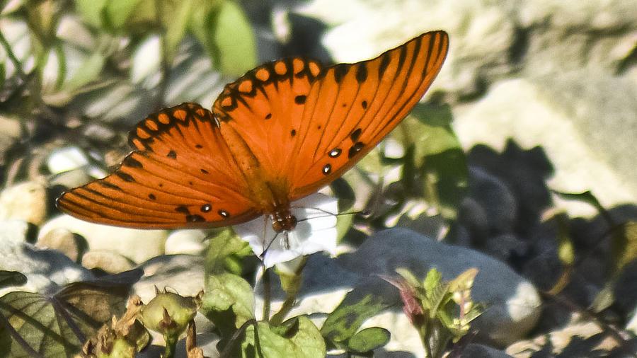 Butterfly Photograph - Breakfast Sweets by Teresa Dixon