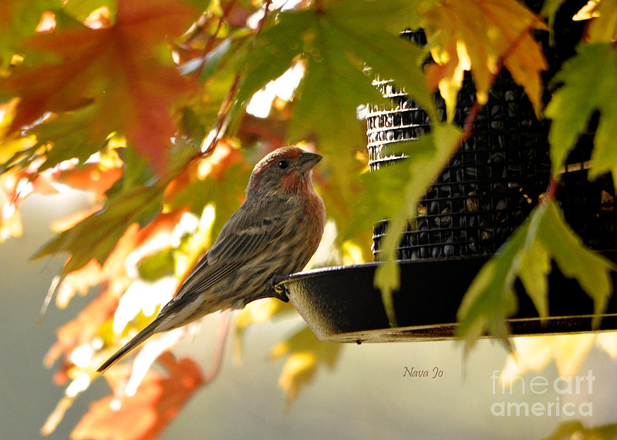 Finch Photograph - Breakfast With A View by Nava Thompson