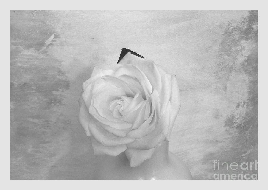 Histogram Photograph - Bridal White Rose by Marsha Heiken