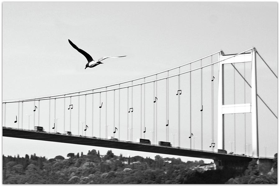 Horizontal Photograph - Bridge And Seagull, Bosphorus, Istanbul, Turkey by Gulale