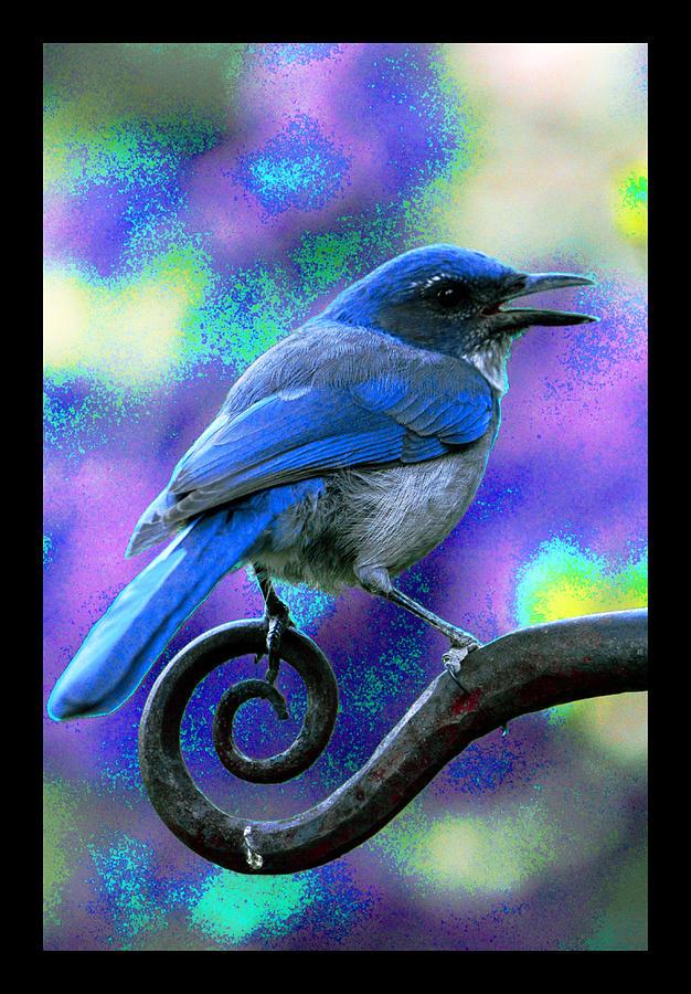 Blue Jay Photograph - Bridge Between Worlds by Susanne Still