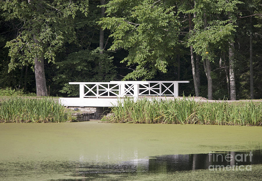 Algae Photograph - Bridge Over An Algae Covered Pond by Jaak Nilson