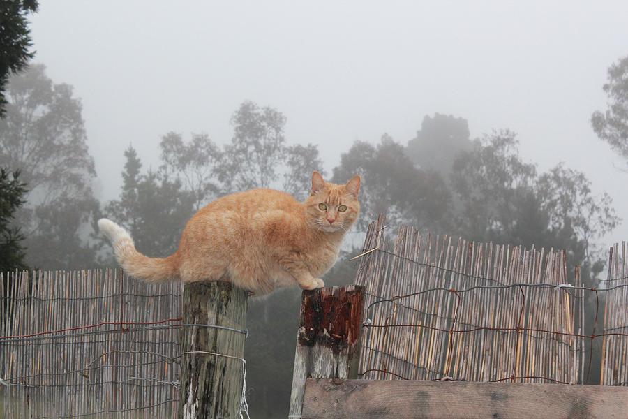 Acrylic Prints Photograph - Bridging Cat by Ron McMath