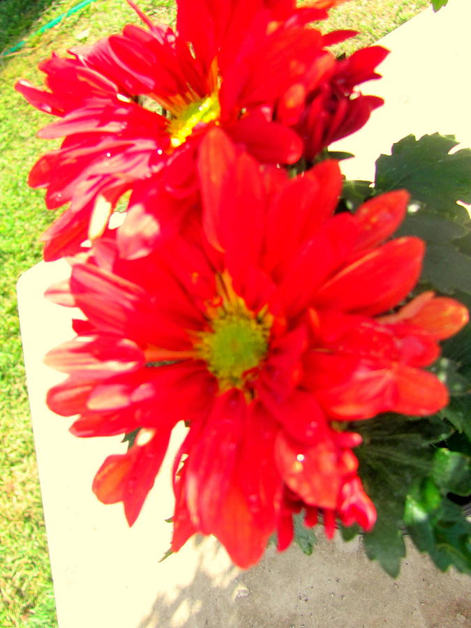 Bright Photograph - Bright Beauties by Amy Bradley