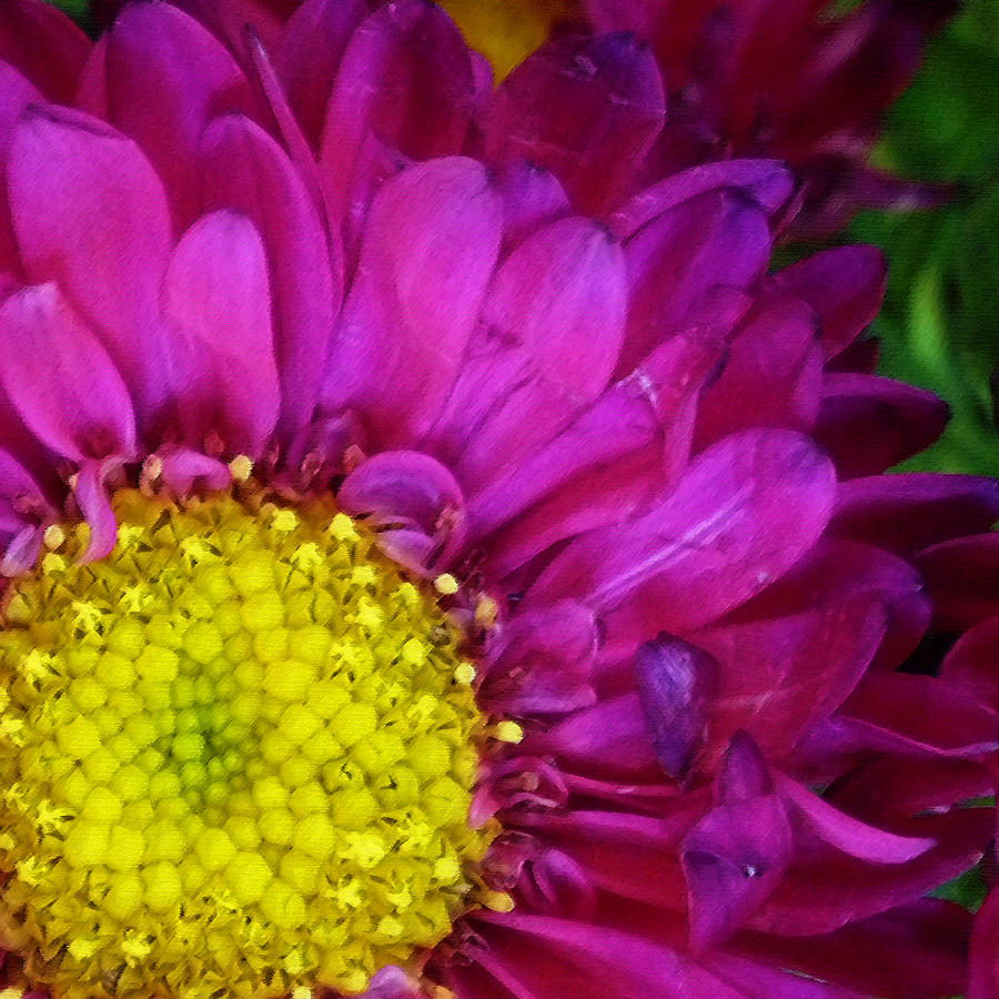 Yellow Photograph - bright Beauty by Tanya Jacobson-Smith