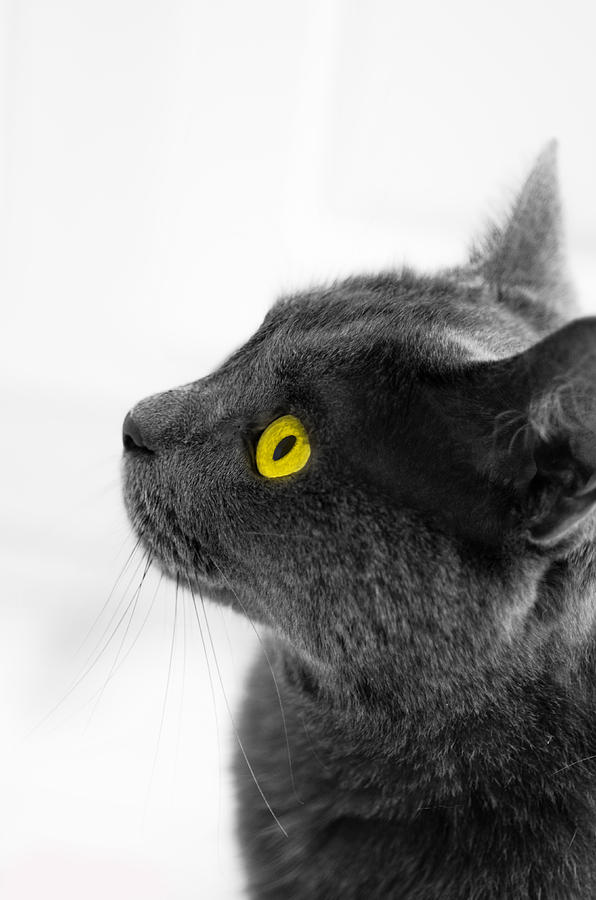 Cat Photograph - Bright Eyes by Vincent  Dale