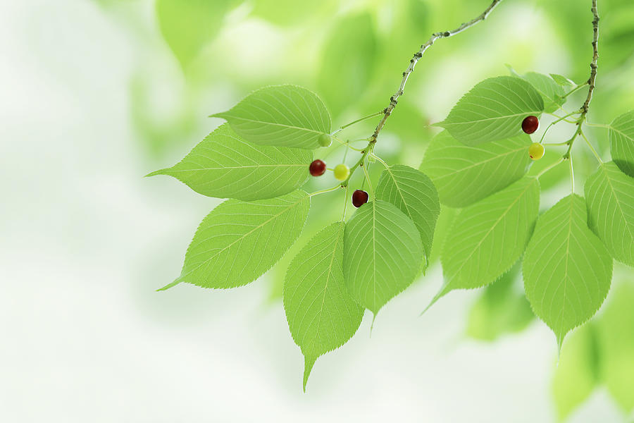 Horizontal Photograph - Bright Green Leaves by Imagewerks