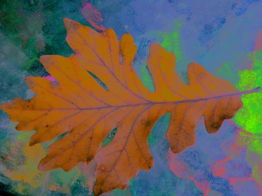 Oak Photograph - Bright Oak by Beth Akerman