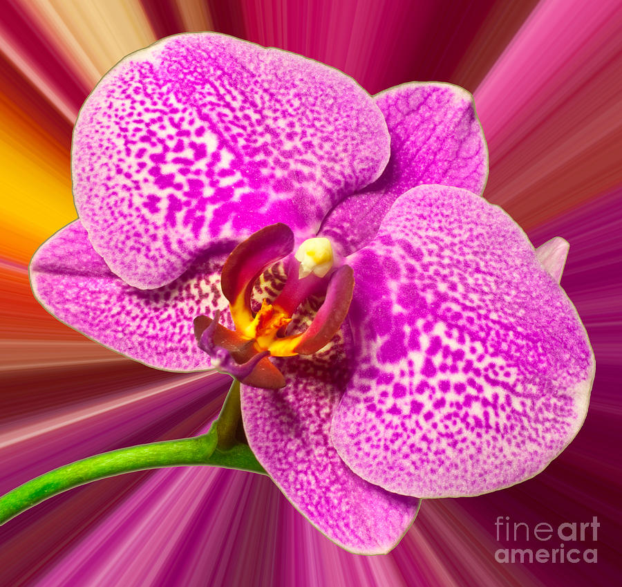 Orchid Photograph - Bright Orchid by Michael Waters