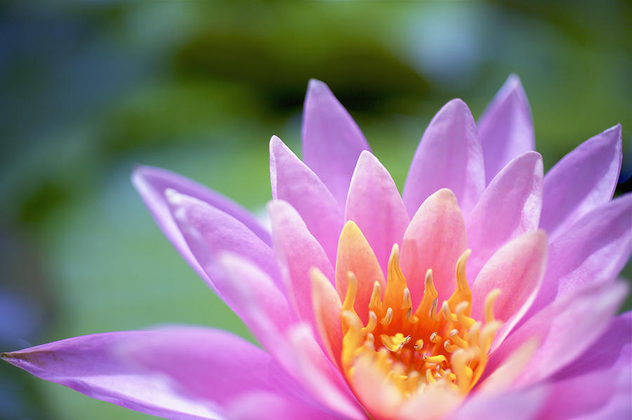 Beautiful Photograph - Bright Pink Water Lily II by Kicka Witte