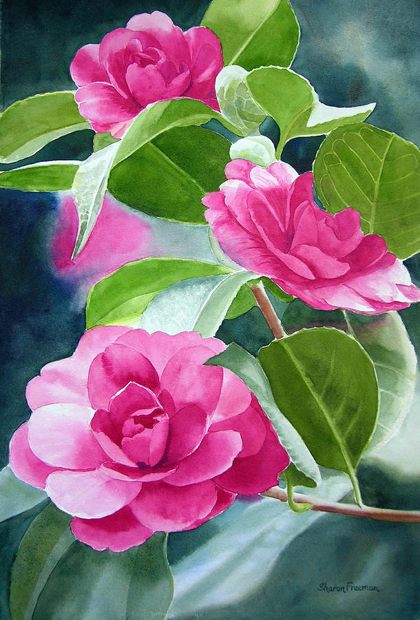 Pink Camellia Painting - Bright Rose-colored Camellias by Sharon Freeman