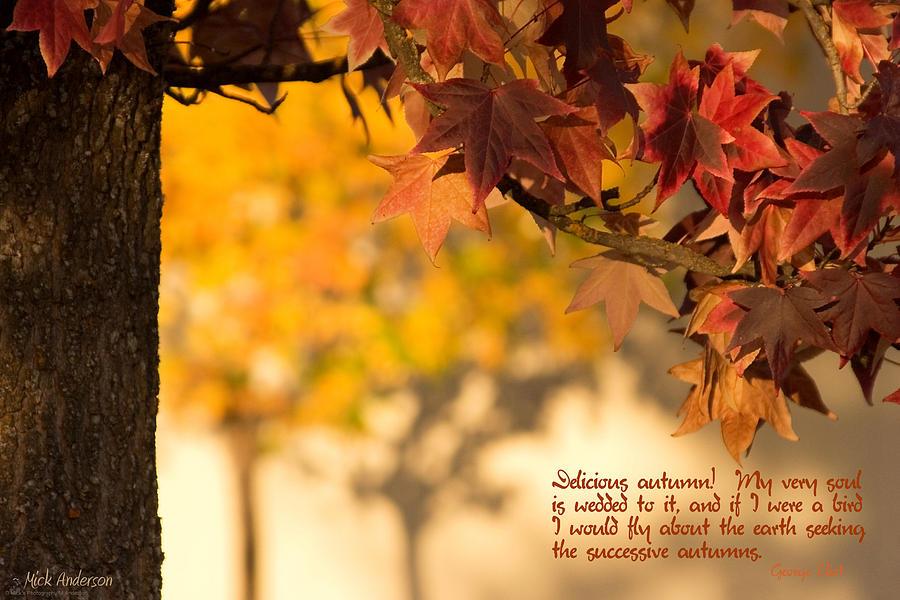 Brilliant Autumn Color Photograph