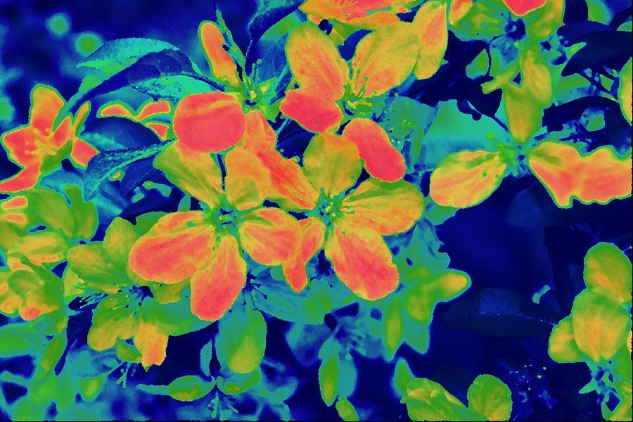 Nature Photograph - Brilliant Blossoms II by Tessa Murphy