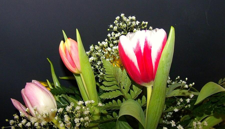 Flowers Photograph - Brilliant Flowers by Jose Lopez