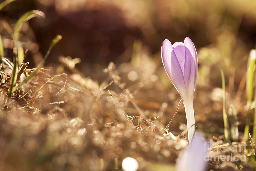 Odon Photograph - Brilliant Flowers by Odon Czintos