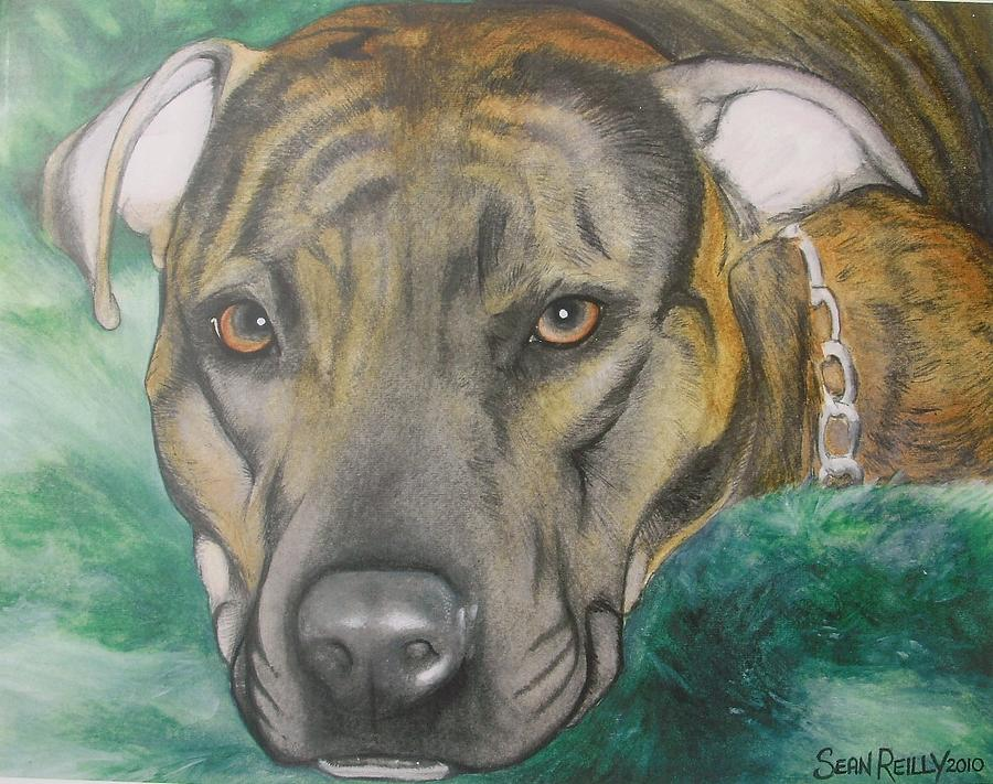 Brindle Coat Pitbull Painting by Sean Reilly