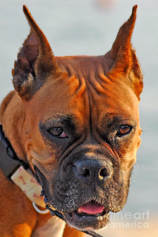 Dog Photograph - Bring It On by Joann Vitali
