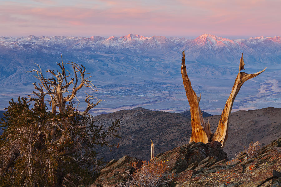 Sierra Photograph - Bristlecone Bishop Sunrise by Nolan Nitschke