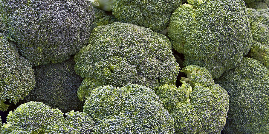 Vegetables Photograph - Broccoli by Forest Alan Lee