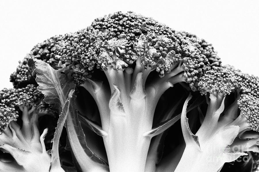 Broccoli Photograph - Broccoli On White Background by Gaspar Avila