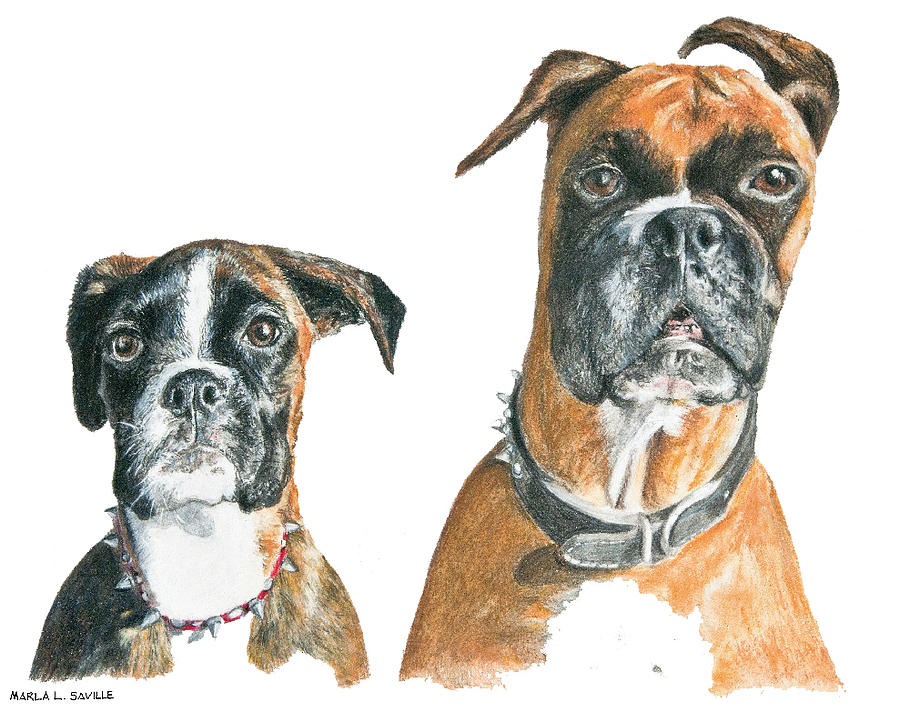 Dogs Painting - Brooklyn Boxers by Marla Saville