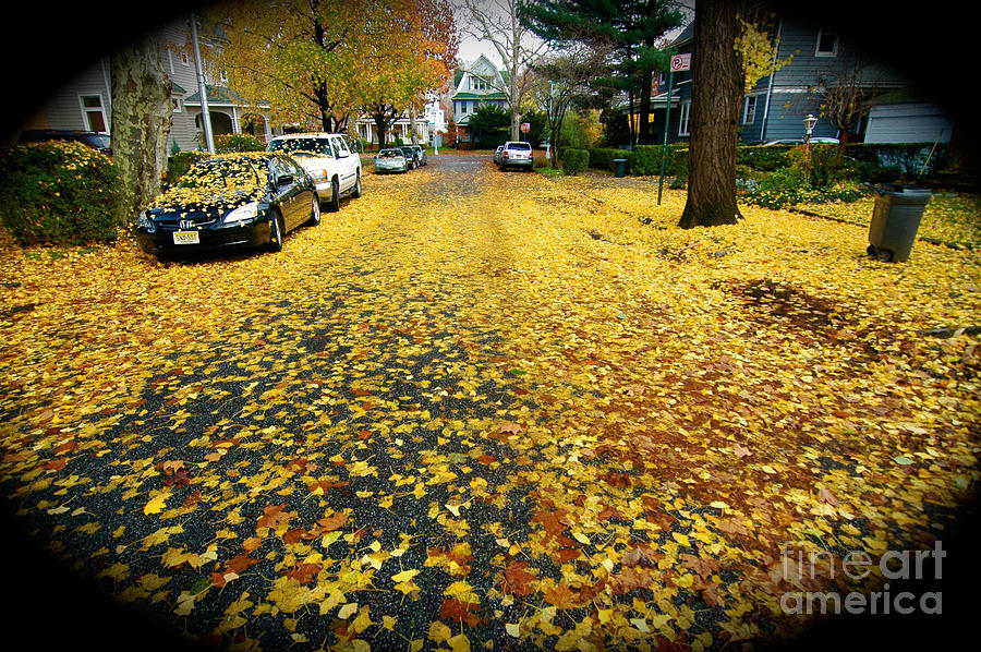 Fall Leaves Photograph - Brooklyn New York by Mark Gilman