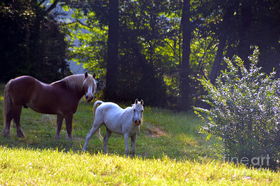 Horse Photograph - Brown And White Horse-19 by Eva Thomas