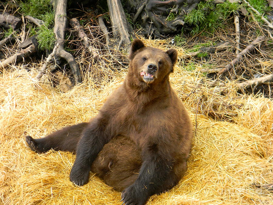 Bear Digital Art - Brown Bear by Derek Swift