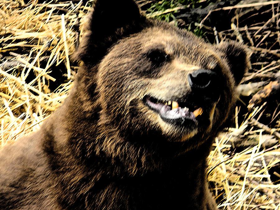 Bear Photograph - Brown Bear Smiling by Derek Swift