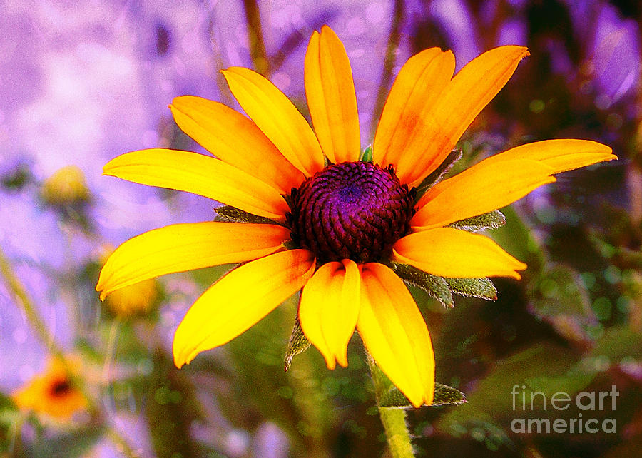 Sunflower Photograph - Brown-eyed Susan by Judi Bagwell