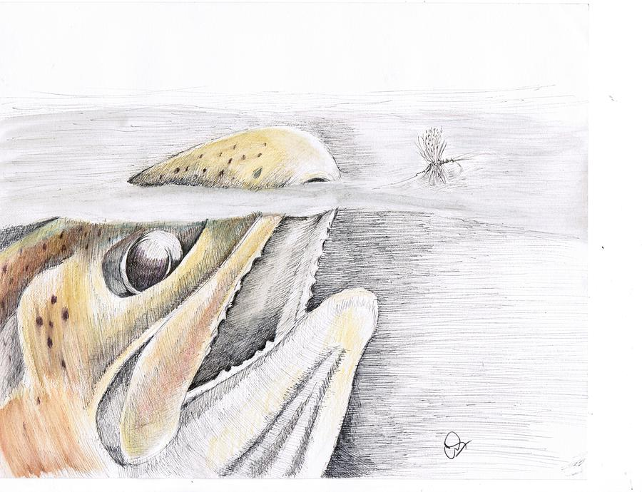 Trout Drawing - Brown Trout  by H C Denney