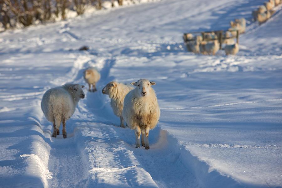 Snowdonia Photograph - Bryn Rhyg Farm - Near Llan Ffestiniog by Rory Trappe