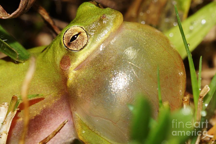 Tree Frog Photograph - Bubbleicious 2 by Lynda Dawson-Youngclaus