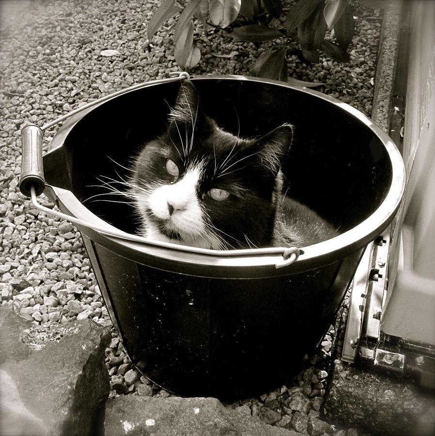 Cat Photograph - Bucket Head by John O Doherty