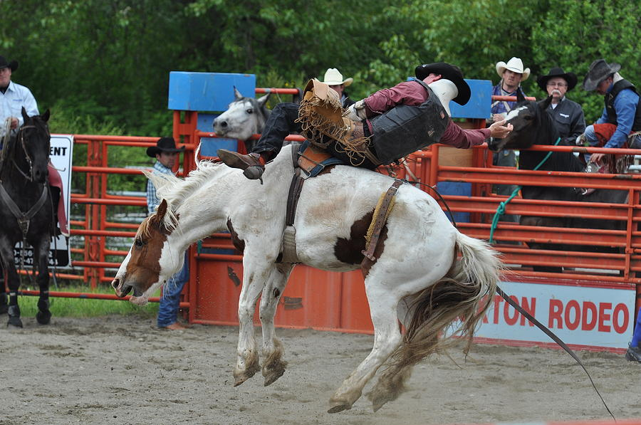 Rodeo Photograph - Bucking Bronc by Malcolm  Chalmers