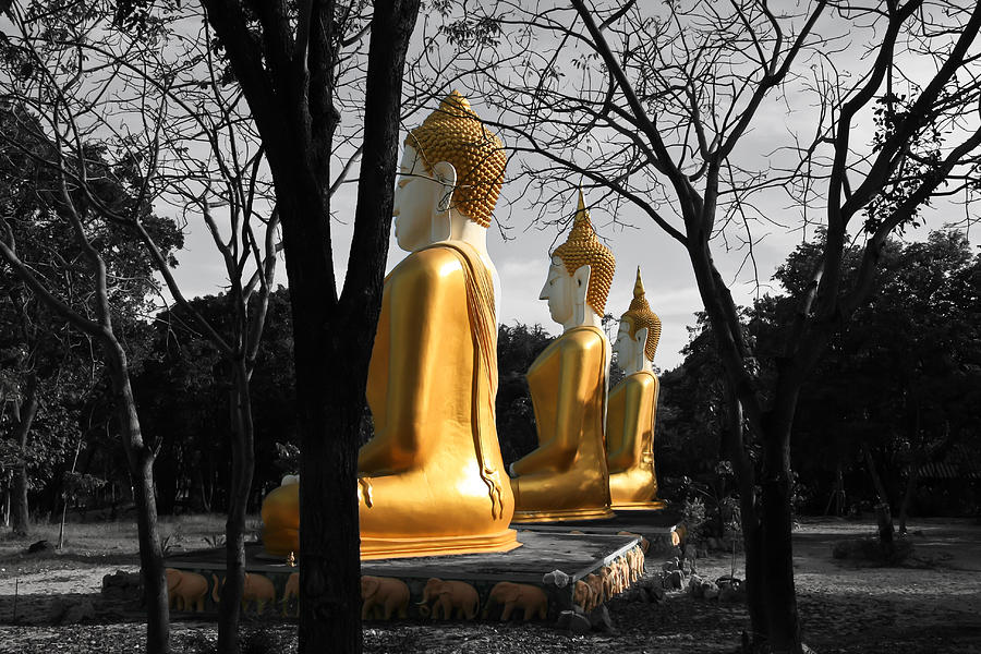 Buddhism Photograph - Buddha In The Jungle by Adrian Evans